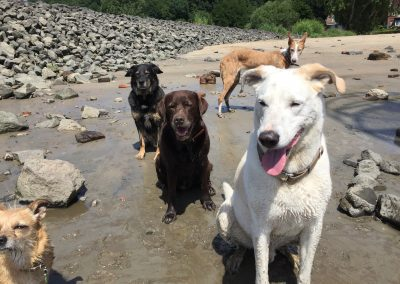 Die Hundeclique am Elbstrand