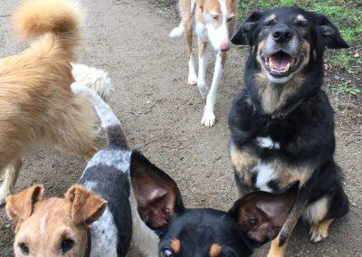 Die Hundeclique